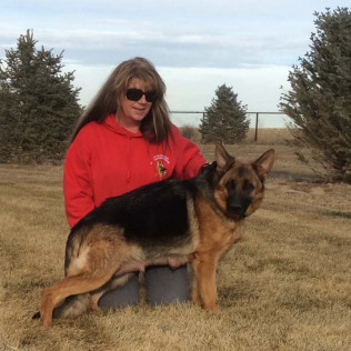 German Shepherds Puppies for sale in Ft. Collins, Pierce, and Greeley, CO